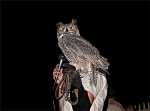 Liberty Wildlife Owl Release