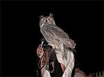 Liberty Wildlife Owl Release