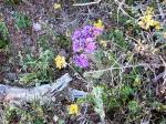 Yelow and Purple Boquets